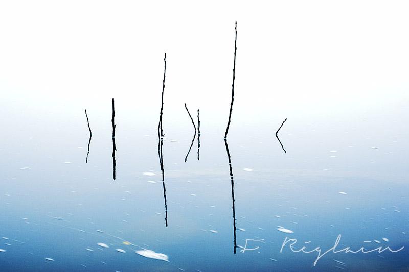 PhotographeNature-FredericREGLAIN-05